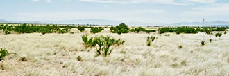 Flat 1+ Acre Grassland in Southern Arizona