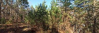 Wooded Louisiana Property Near Lake