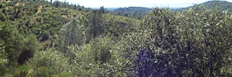 Hillside Property Surrounded by Homes 20 minutes from Lake Shasta