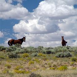 Horses-in-Arizona