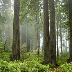 Redwood_National_Park_248