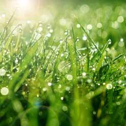 Grass_248