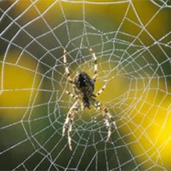 Spider248x248