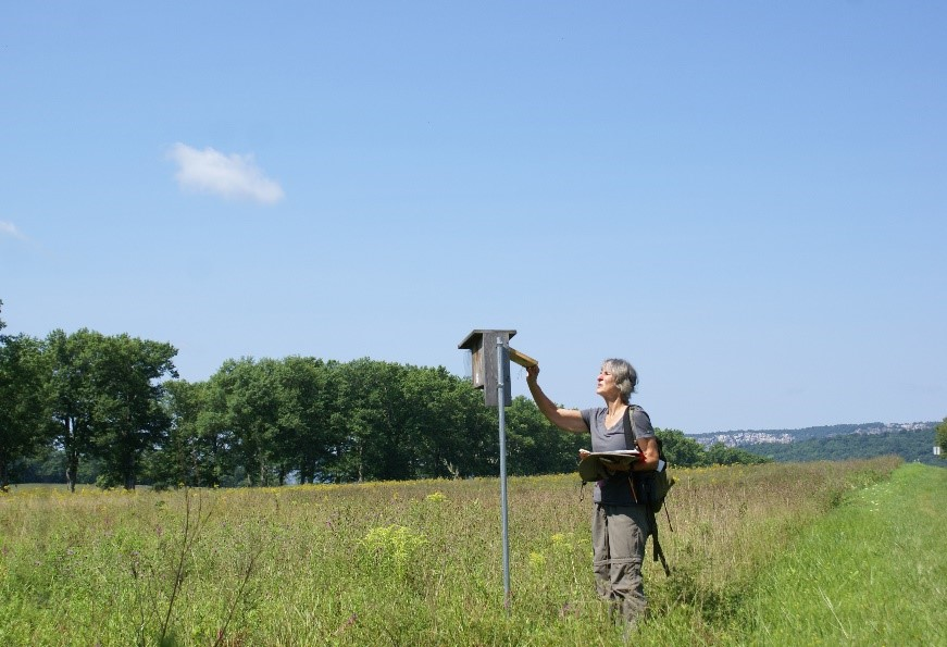 A citizen science volunteer monitoring a nest on Mohonk Preserve's Bluebird Trail/Photo by Amanda Rogers