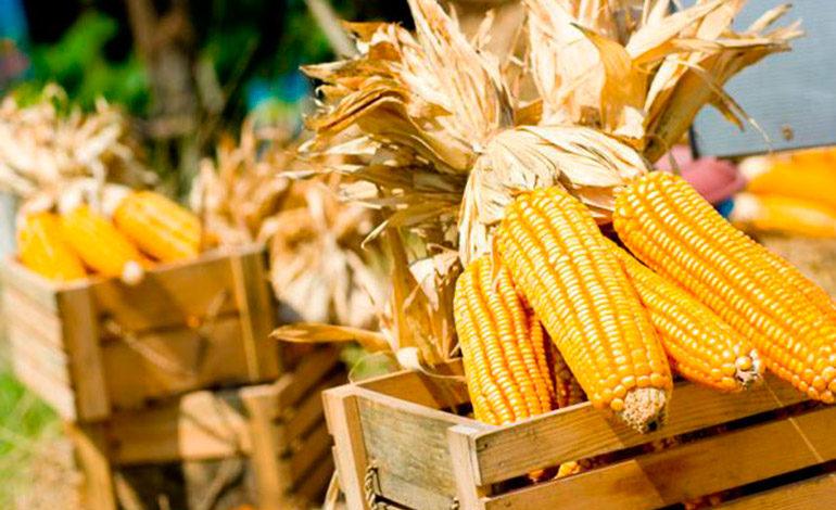 Preparan la negociación del quintal de maíz