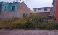 Sapos y culebras en montarral sucio de residencial Las Cascadas