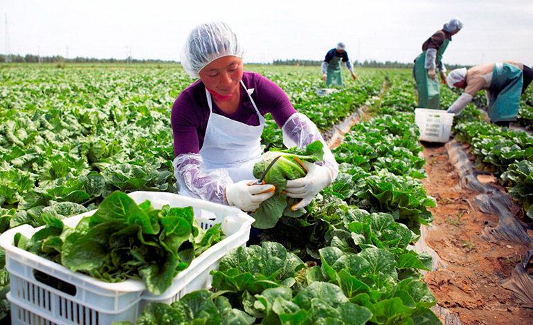 Crean estrategia de agricultura familiar