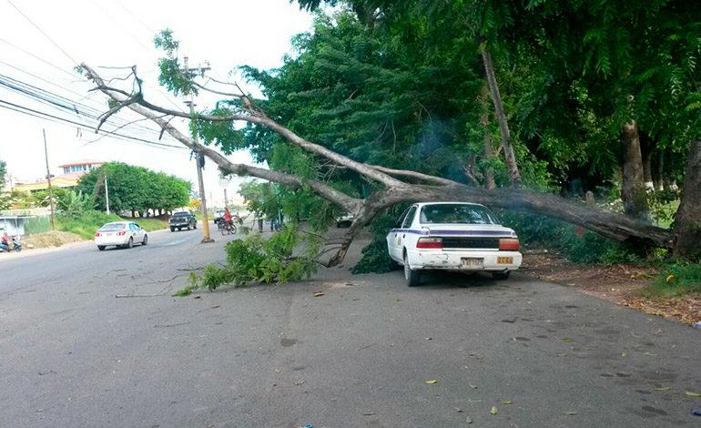 Árbol cae sobre taxi y cableado eléctrico en colonia de La Ceiba