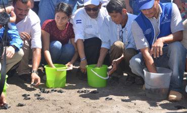 Exitosa liberación de más de  63 mil tortugas al Pacífico