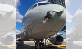 Un pájaro impactó contra un avión y así quedó incrustado en el fuselaje