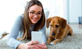 Los perros envejecen de la misma forma que los humanos