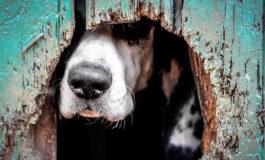 ¡Macabro! Revelan detalles de la muerte de la joven devorada por sus perros