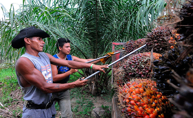 A unos 600 millones suma mora del sector campesino