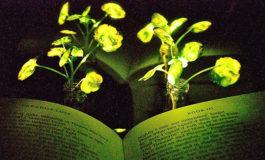 Plantas con luz propia
