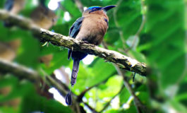 Ornitólogos registran 303 especies de aves