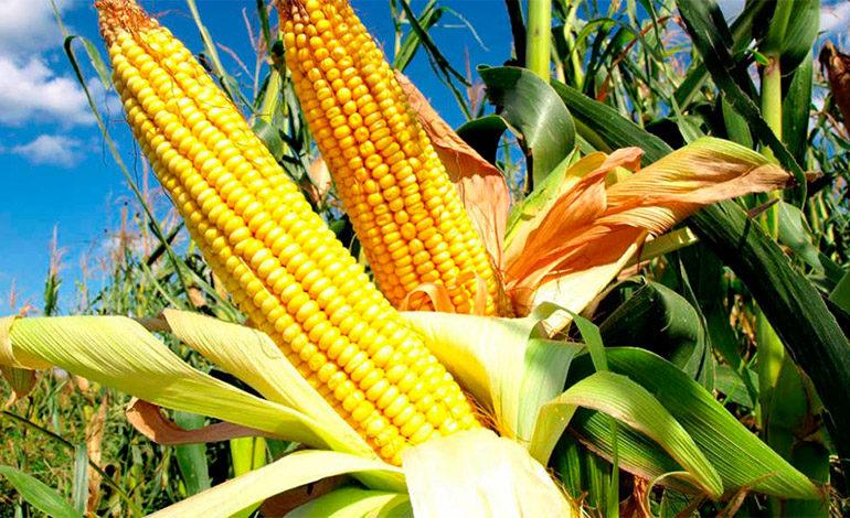 Ahiba y SAG definen estrategia que facilite créditos agrícolas