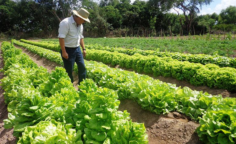 Con más de L5,500 millones potenciarán el sector agrícola