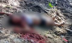 """Encuentran muerta a """"La diablita"""" en La Ceiba"""