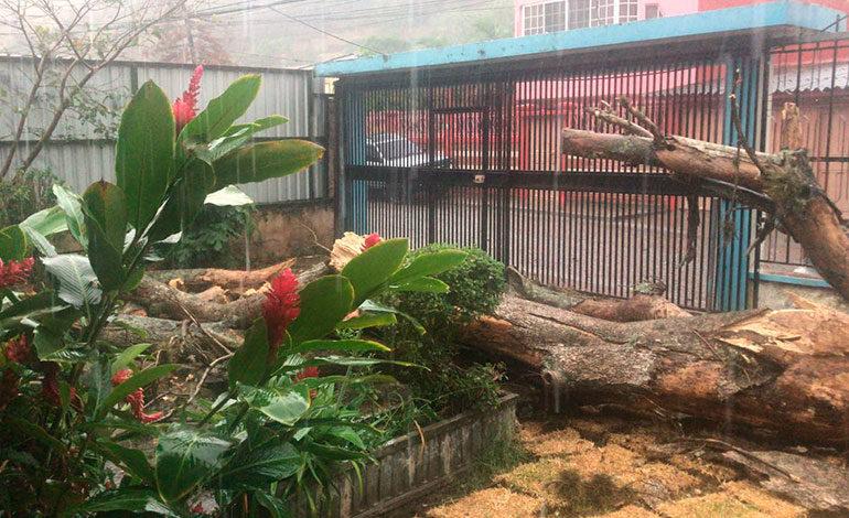 Afortunadamente, este árbol cayó en el corredor de una vivienda y no causó daños mayores.
