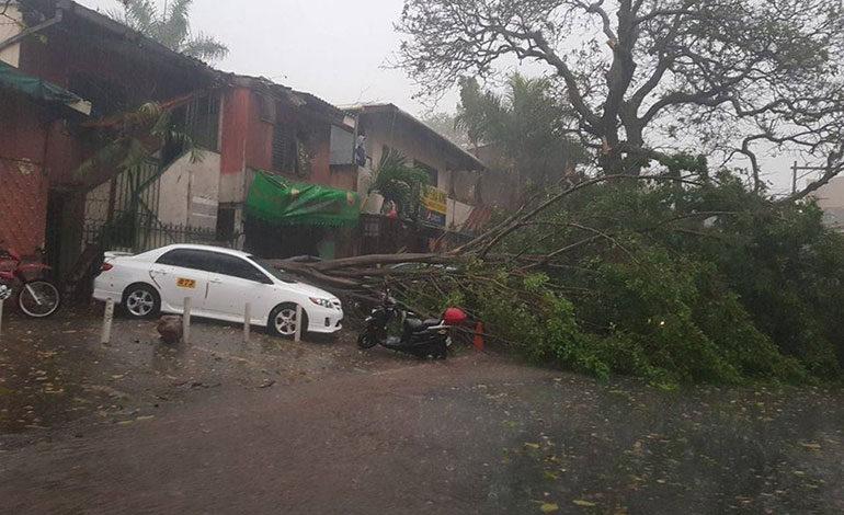 En el sector del Ministerio Público, en Lomas del Guijarro, un enorme árbol cayó sobre unos automóviles, lo que obstaculizó el tráfico vehicular.