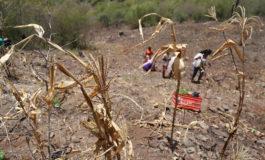 Ombudsman hondureño pide apoyo internacional para ayudar afectados por sequía