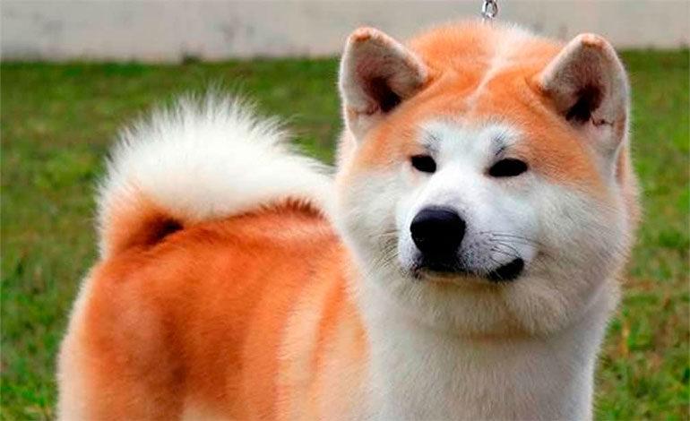 Google Maps 'inmortaliza' a un perro en plena persecución
