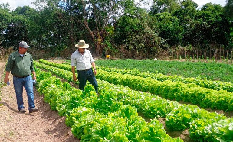 Mesas Agroclimáticas, iniciativa para enfrentar efectos del cambio climático
