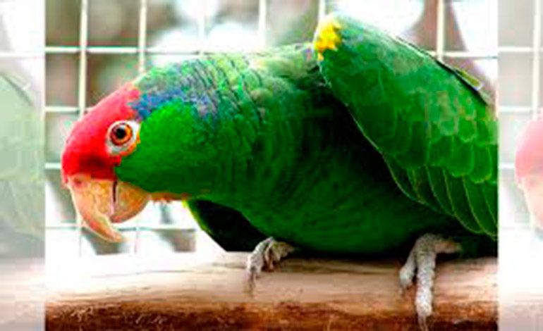 ICF devolverá dinero por registro de aves