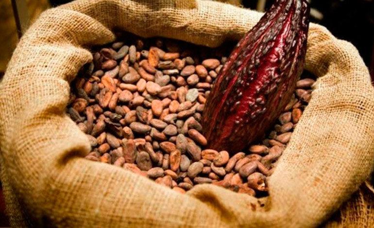 Exportación de cacao dejará 5 millones de dólares en divisas