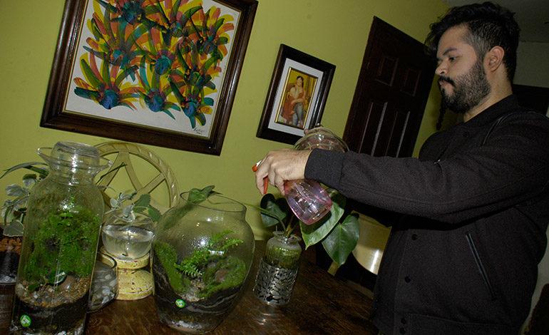 Emprendedores crean bosques de musgos en miniatura