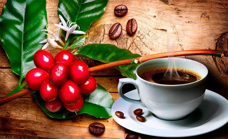Honduras participará con 36 lotes de café en subasta Taza de Excelencia 2018