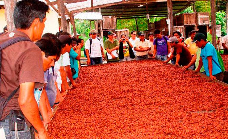 Crean la federación de cacaoteros de Honduras