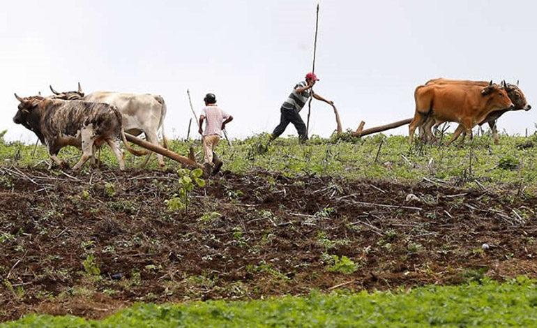 Sugieren a campesinos migrar al sorgo y ajonjolí