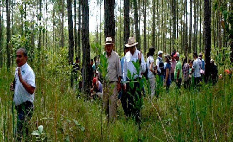 Indígenas pech resinan por primera vez en Honduras