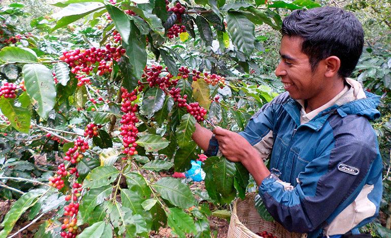 Europeos destacan auge comercial con Honduras