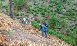 EEH finaliza con éxito jornada de reforestación en San Pedro Sula