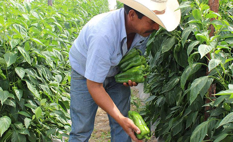 USDA fortalece comercialización de los pequeños productores