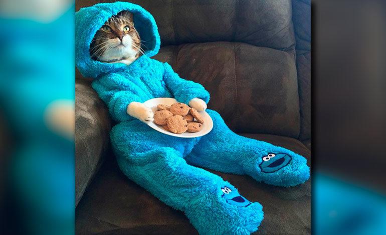Embajada de EEUU en Australia se disculpa por invitación de gato en pijama
