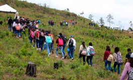 Programa de reforestación generará unos 5,000 empleos