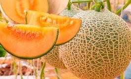 Taiwán fortalece compra de melón hondureño