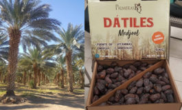 Hondureños conocen bondades del cultivo de palma datilera en México