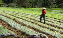 Agricultura y ganadería impulsan el PIB en 2018