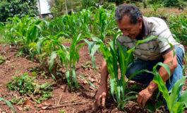 Honduras y la FAO buscan cultivos resistentes para el Corredor Seco hondureño