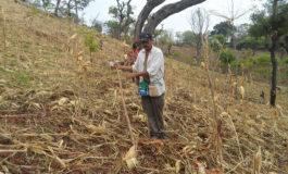 Puerto Rico, Honduras y Nicaragua, entre más vulnerables al cambio climático
