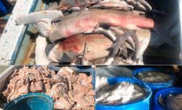 Capturan a 33 personas con mil libras de carne de tiburón martillo