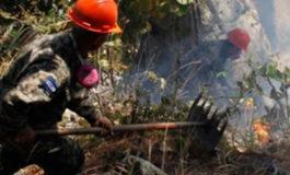 Libres 96% de criminales que depredan bosques