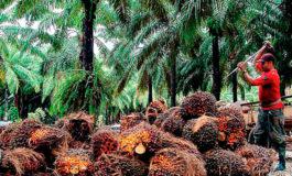 Palmeros piden aprobación de Ley de Biocombustible