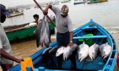 La pesca cae de 23.6% en 2017 a -5% en 2018