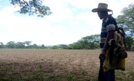 """La SAG recomienda """"sembrar en seco"""" ante próxima sequía"""