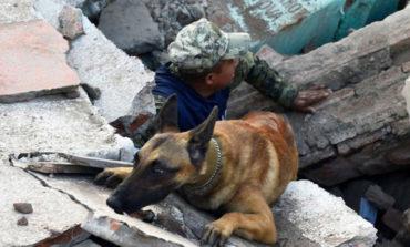 Canes adiestrados para salvar vidas